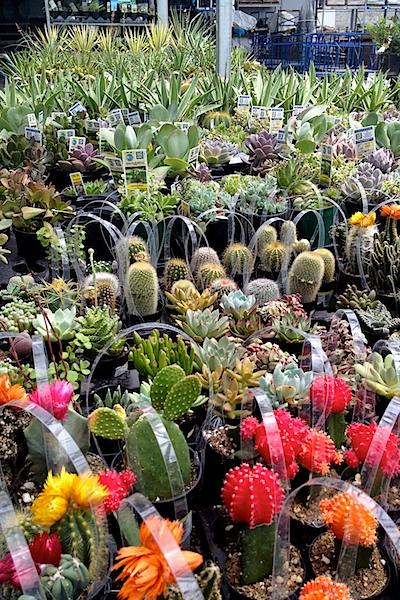 Nettio CA1 succulents1