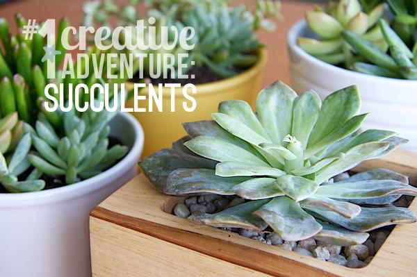 Nettio CA1 succulents21 title